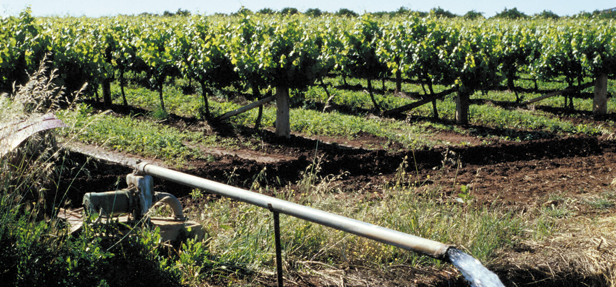 Commercial Vineyard Drainage By MT Plumbing And Drainage In Marlborough